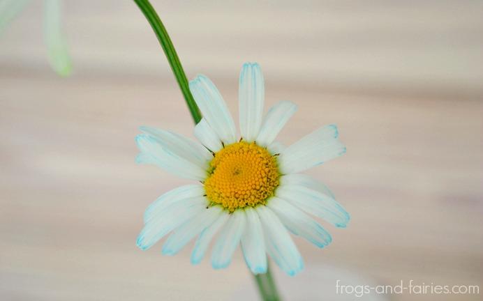 FFflowers4