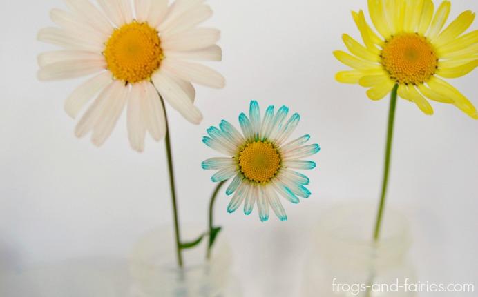 FFflowers5