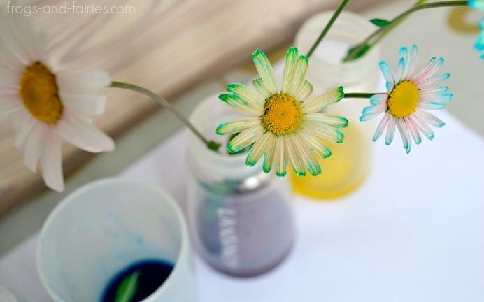 FFflowers7