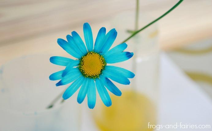 FFflowers9