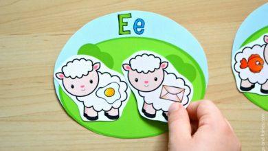 Photo of Sheep Beginning Letter Sounds Match